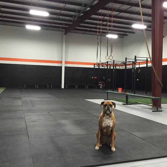 Throwback to our first week in HAC's second location. Some people have stayed with us, others have moved on. But each and every person that has walked through this door has made our community stronger and tighter. Hidden Alley CrossFit is thankful for ALL of you!! You just can't replicate what has happened in this gym. ⠀ *Ohh, and there's Dixie too… cause dogs are better than most people